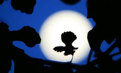 Сильный приворот в полнолуние на любовь: 2 эффективных ритуала