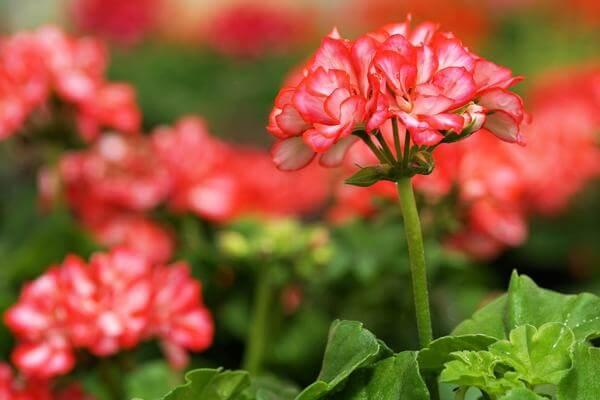 Какие цветы помогают от сглаза