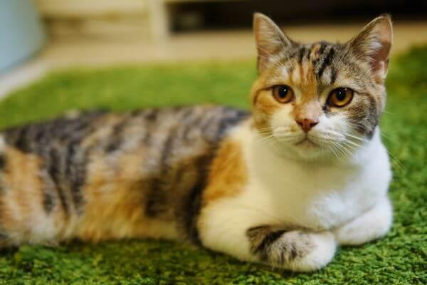 Кот для заговора от долгов