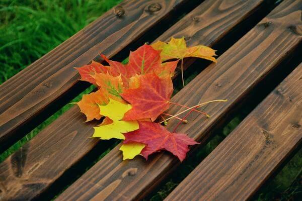 Осень – пресыщение