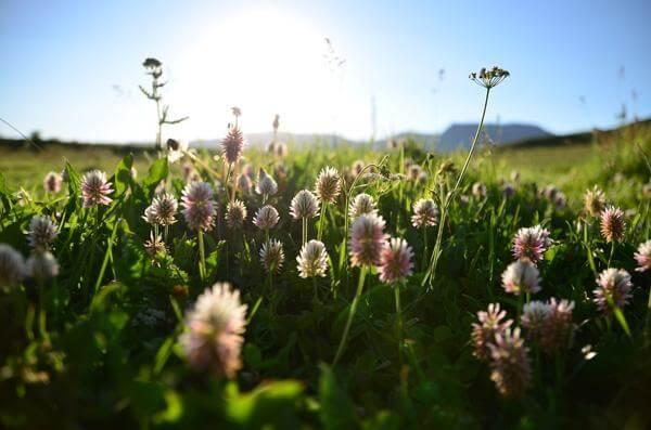 Лето – пора расцвета