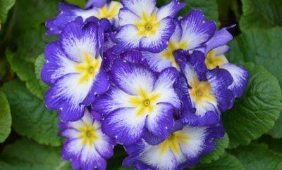Цветы от сглаза: могут ли помочь?