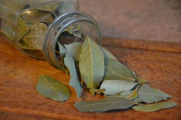 Обряд на исполнение желания с лавровым листом